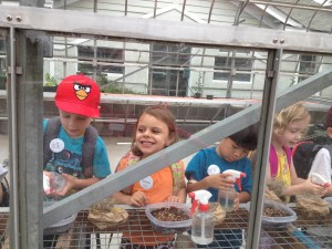 Rising-kindergarten campers enjoy watering their broccoli sprout initials in the Children's Garden Greenhouse!