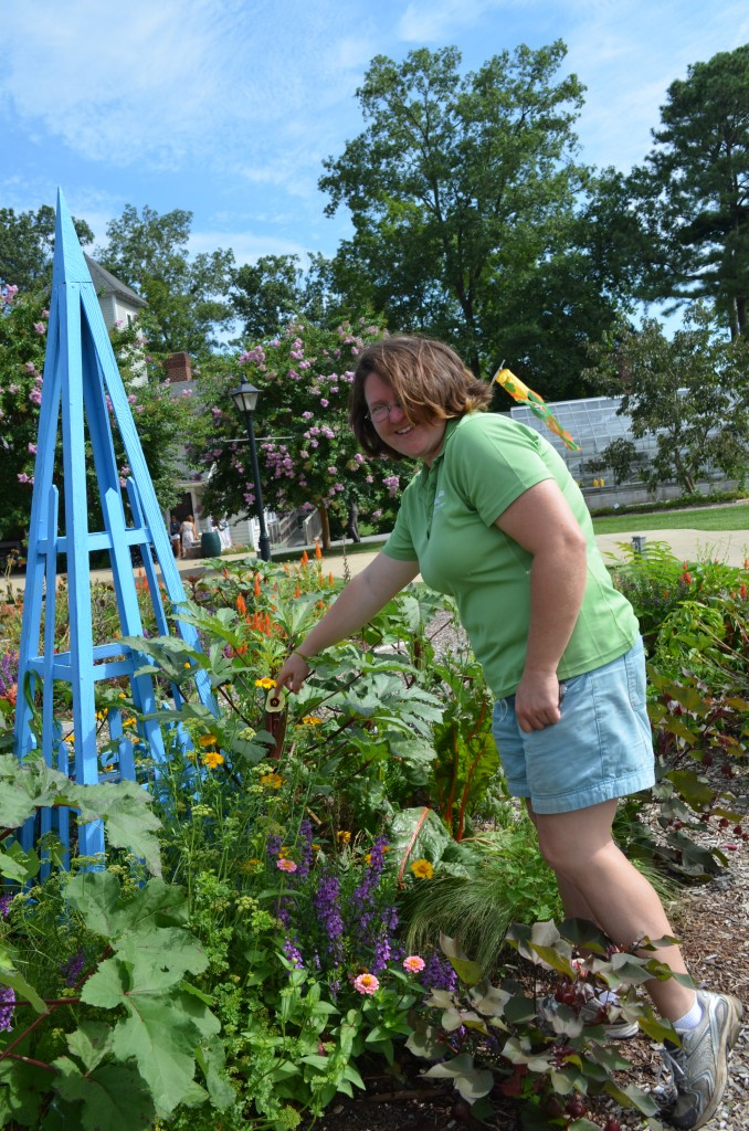 Children's Garden horticulturist Heather Veneziano  showing off some cousins -- okra, cotton & hibiscus!