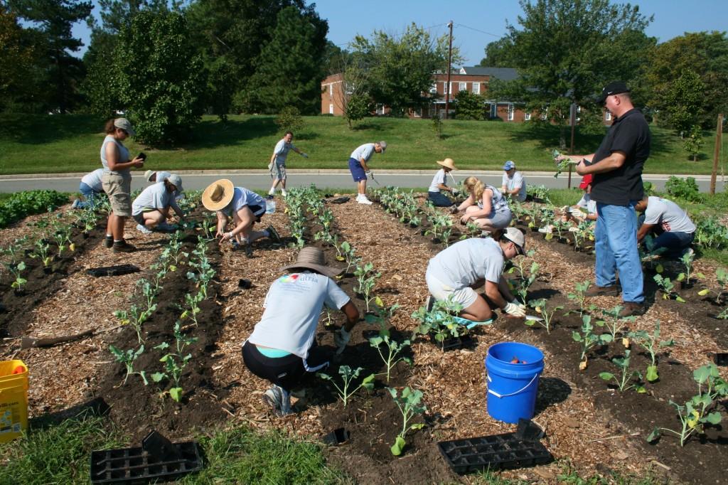 Altria volunteers install the broccoli plot.