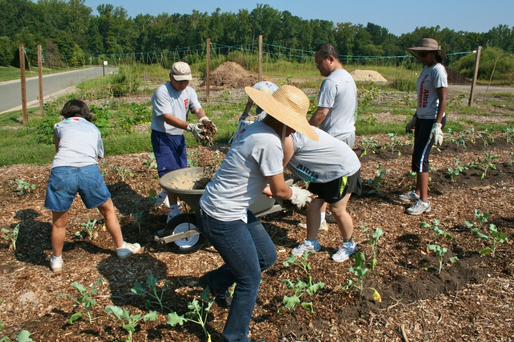 Altria volunteers put the finishing touches on the broccoli plot by mulching the beds.