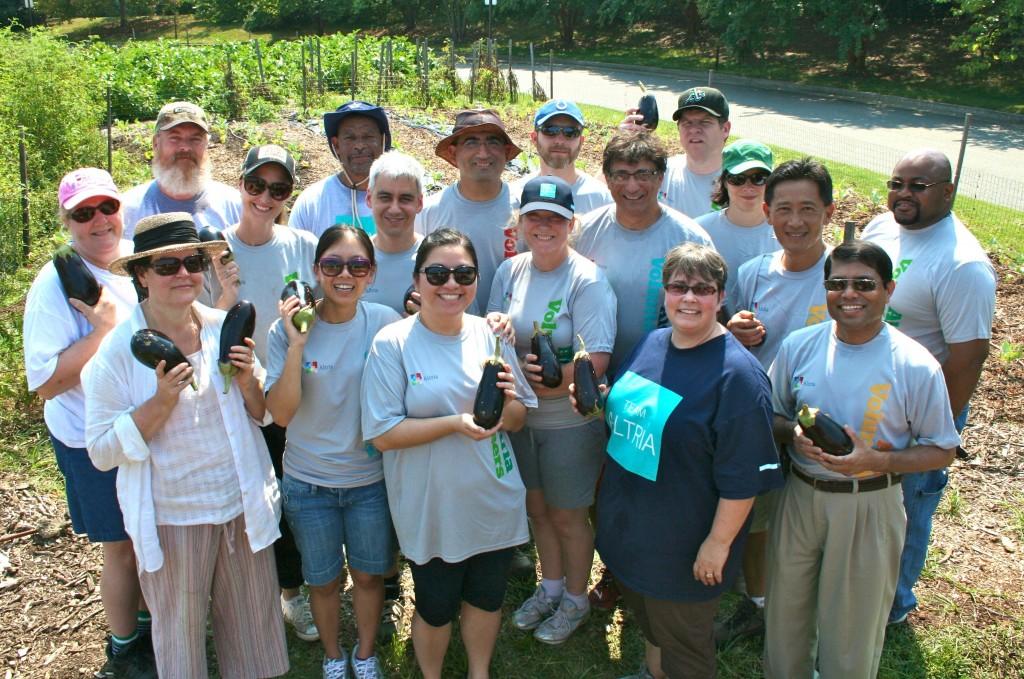 Altria volunteers, Lewis Ginter Community Kitchen Garden, day 3.
