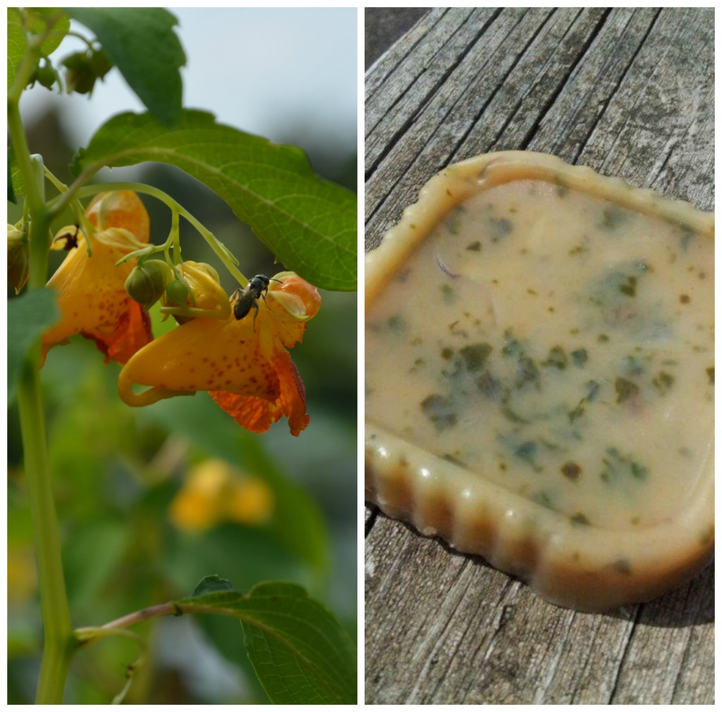 Jewelweed plant & soap.