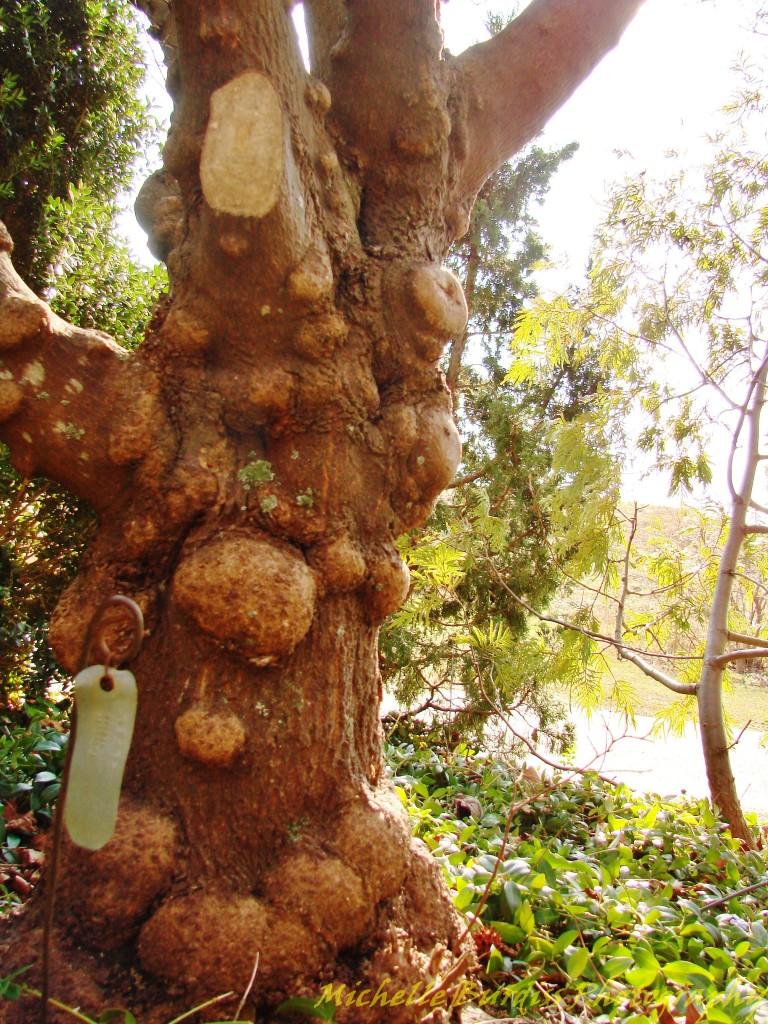 super knobby tree trunk