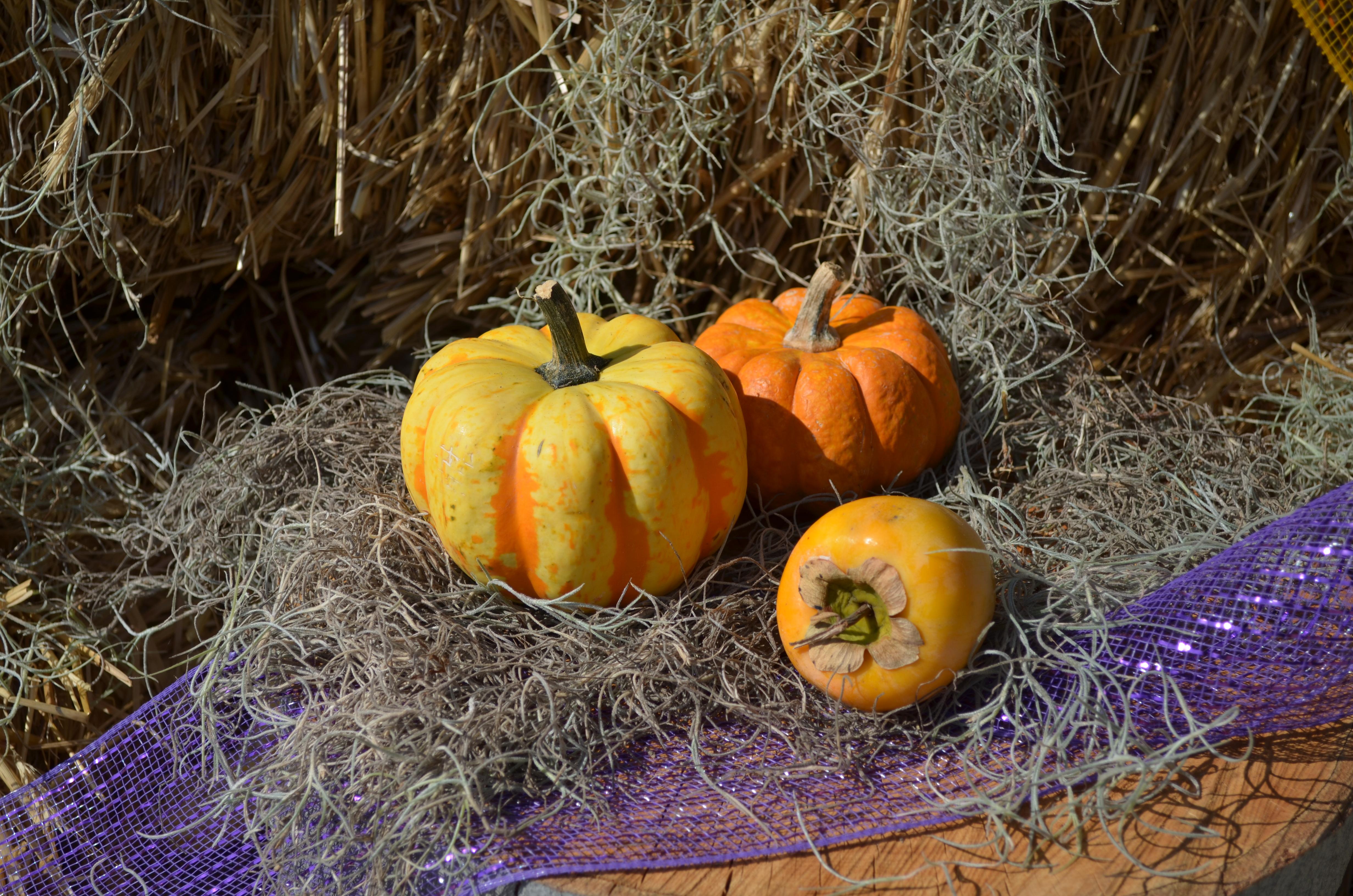 gourds Lewis Ginter Botanical Garden