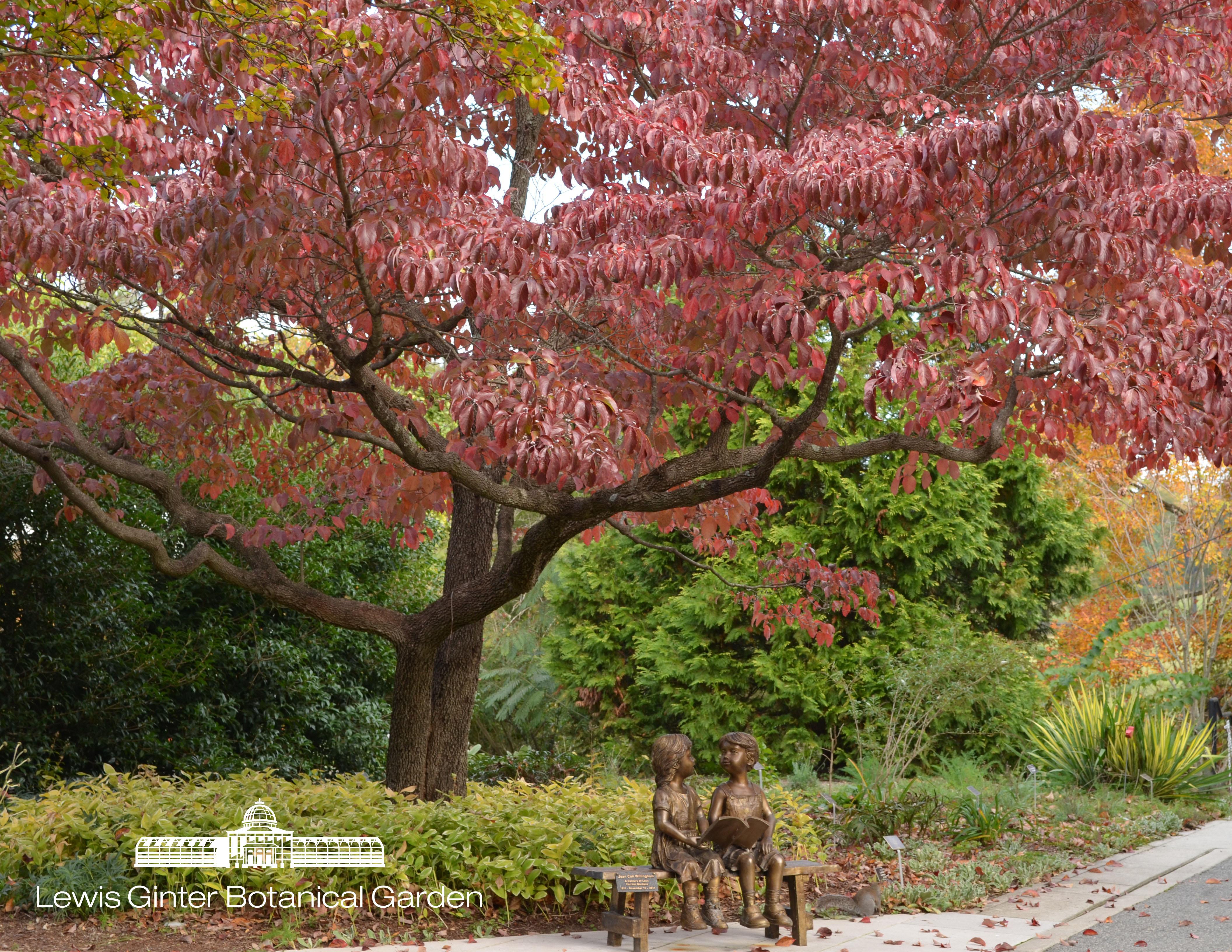 Fall Lewis Ginter Botanical Garden
