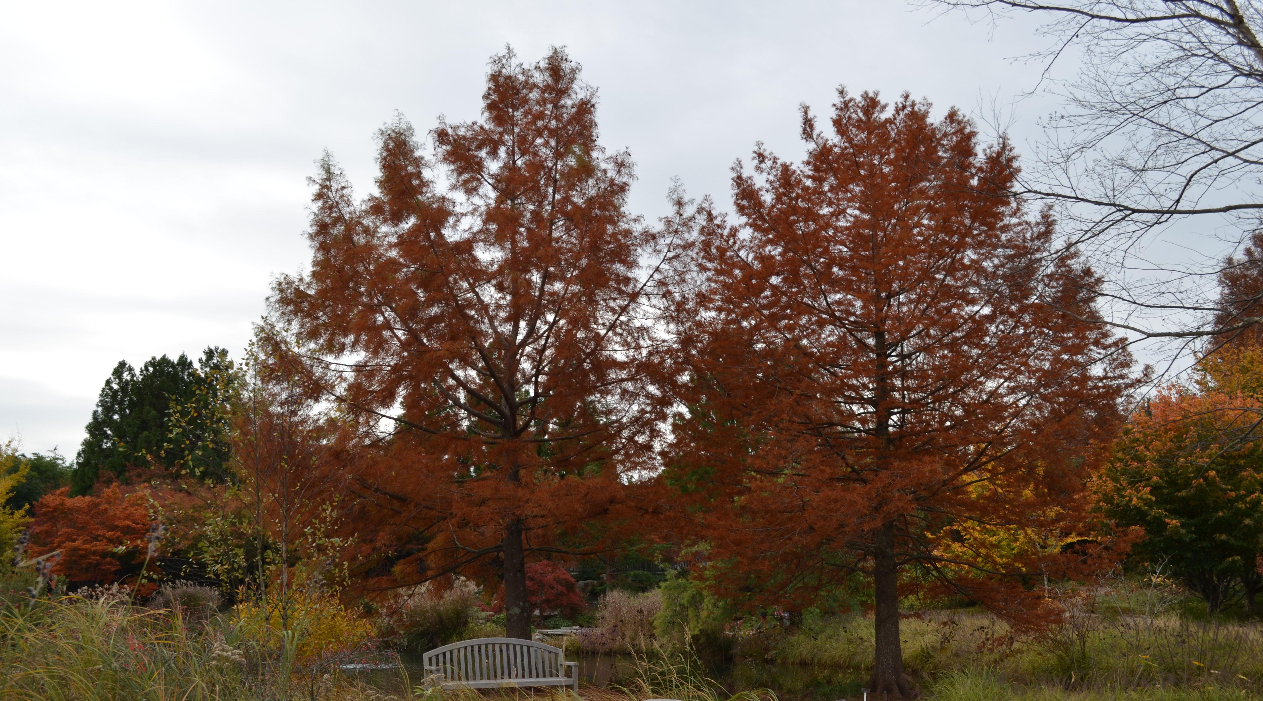 West Island Garden, Lewis Ginter Botanical Garden