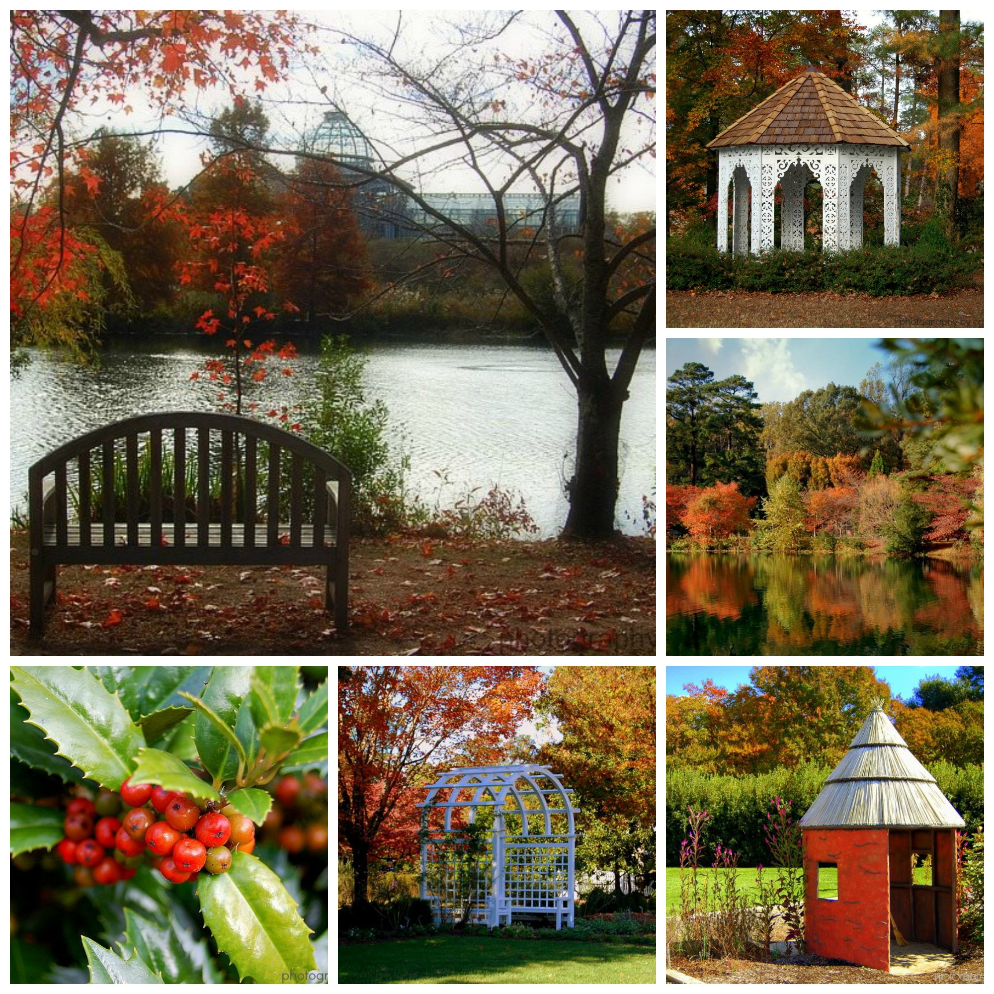 fall foliage at lewis ginter botanical garden