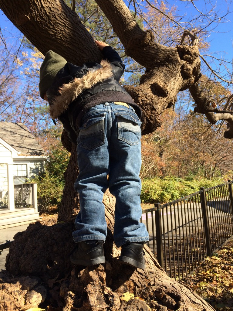 Climbing the 100-year-old mulberry tree.