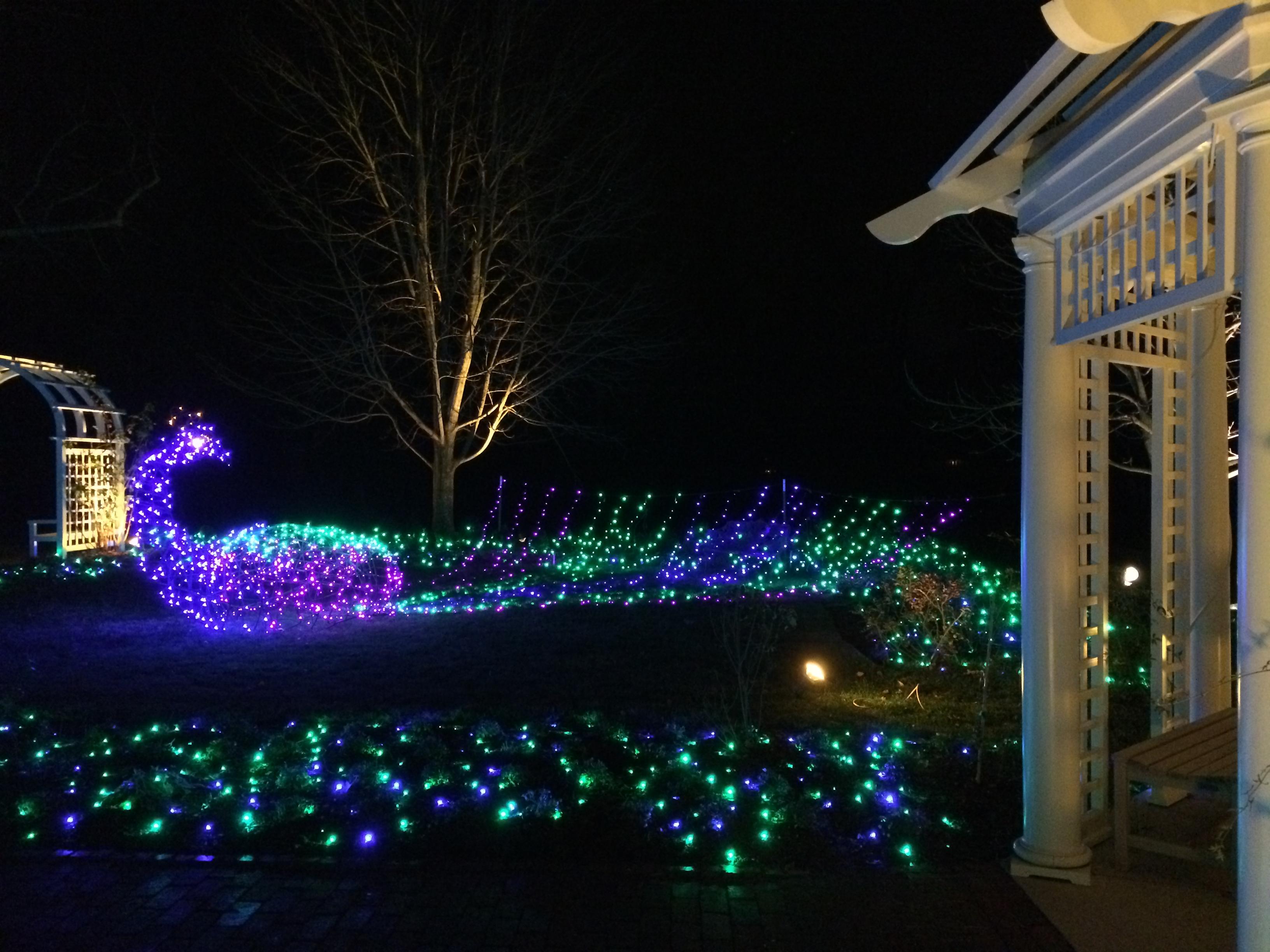 Image result for images Ginter gardens lights