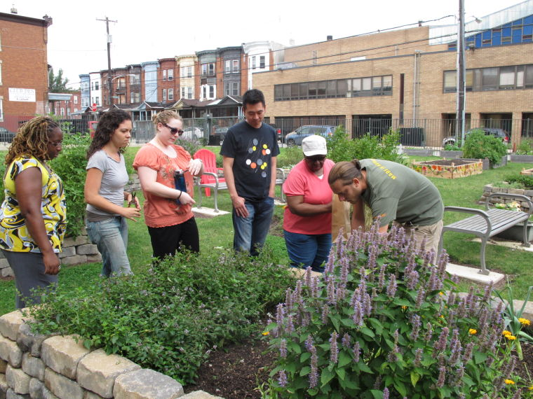 A medicinal herb garden at Temple University in Philadelphia engages the community as it teaches medical students about healing plants. Photo by Eva Monheim.