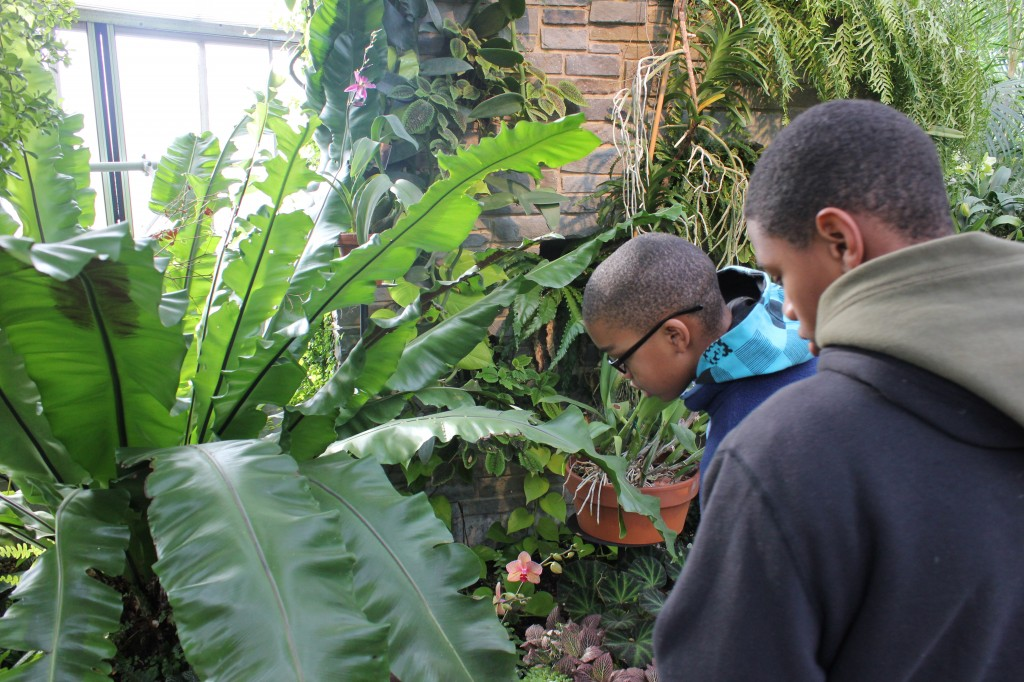 7th grade students from Martin Luther King Jr. Middle School  explore the Conservatory.