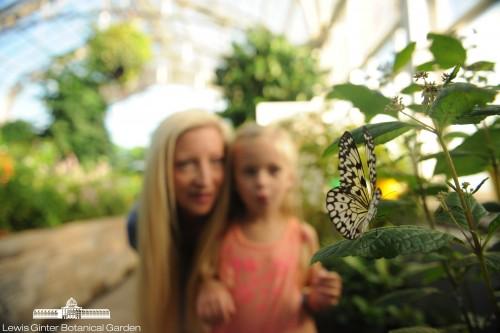 Butterflies LIVE! at Lewis Ginter Botanical Garden. Photo by Scott Elmquist
