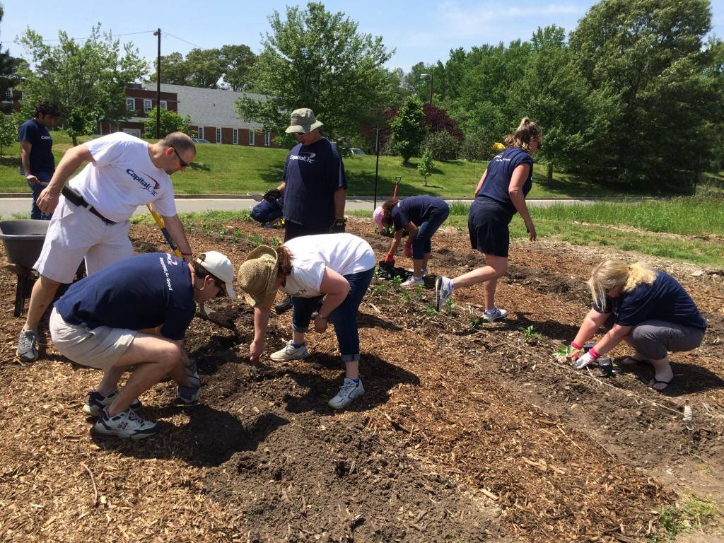 The Capital One team plants peppers.