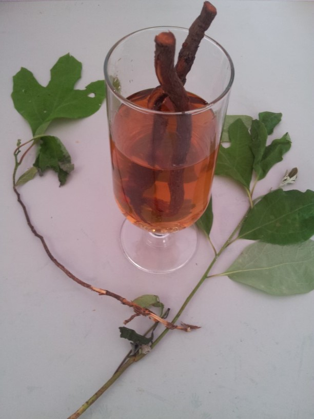 Sassafras root tea and leaves