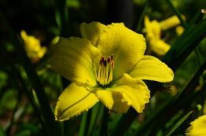 dl green flutter