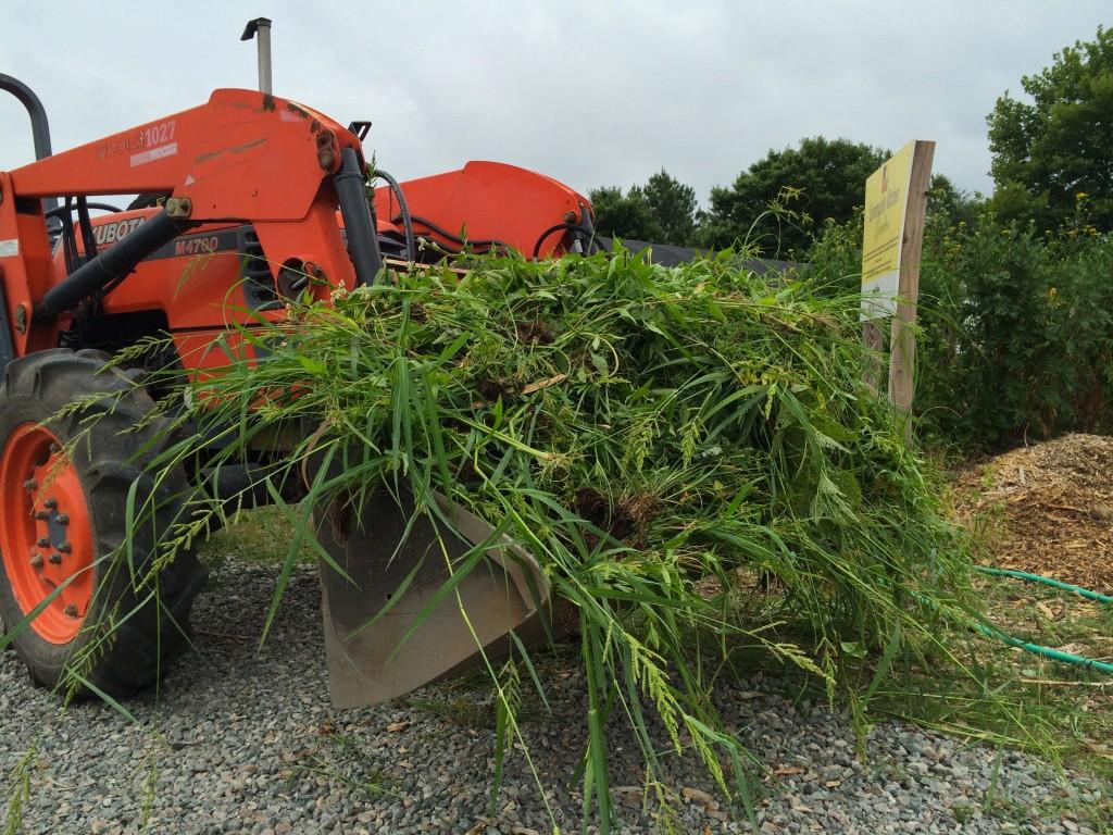 Weeds pulled by CarMax volunteers