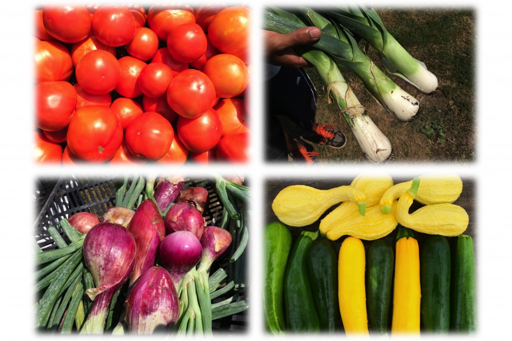 Clockwise from upper left: Slicing tomatoes, King Richard leeks, Red Long of Tropea onions, Crookneck squash (don't they look like ducks?) with Dunja and Gold Rush zucchini.