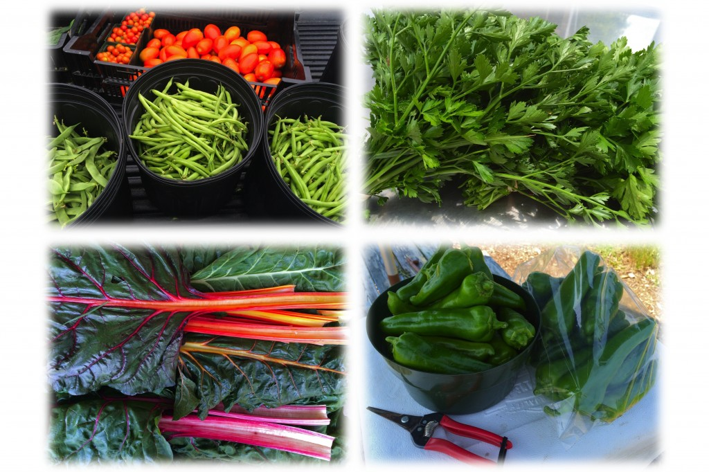 Clockwise from upper left: Granadero Roma tomatoes with Jumbo flat pod and Provider round pod green beans, Giant of Italy parsley, Bright Lights Swiss chard, Carmen sweet Italian pepper.