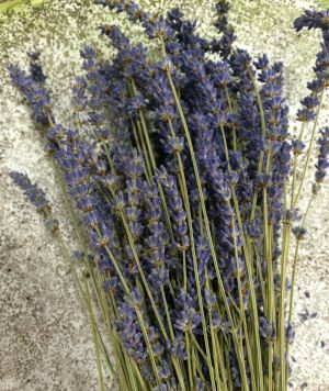 Lavender is a fragrant, flowering herb whose extracted oil helps keep bugs at bay. Its lovely, calming scent is accompanied by lush, purple flowers that enhance any garden setting.