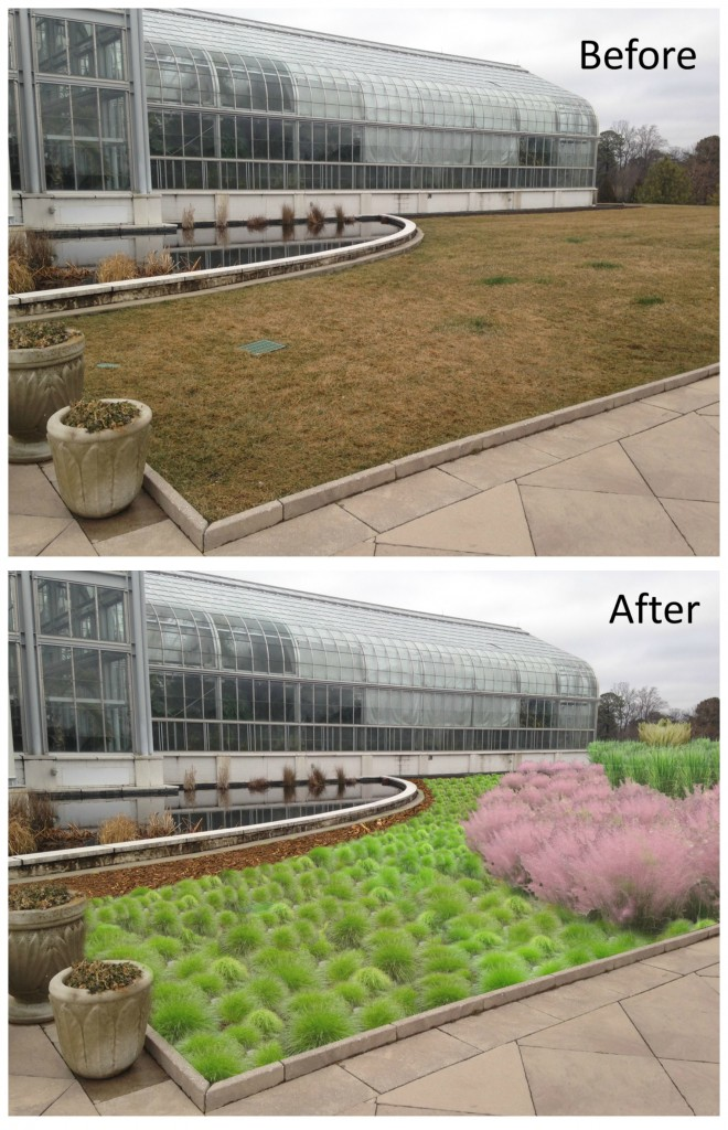 Before and after the ornamental grass plantings.