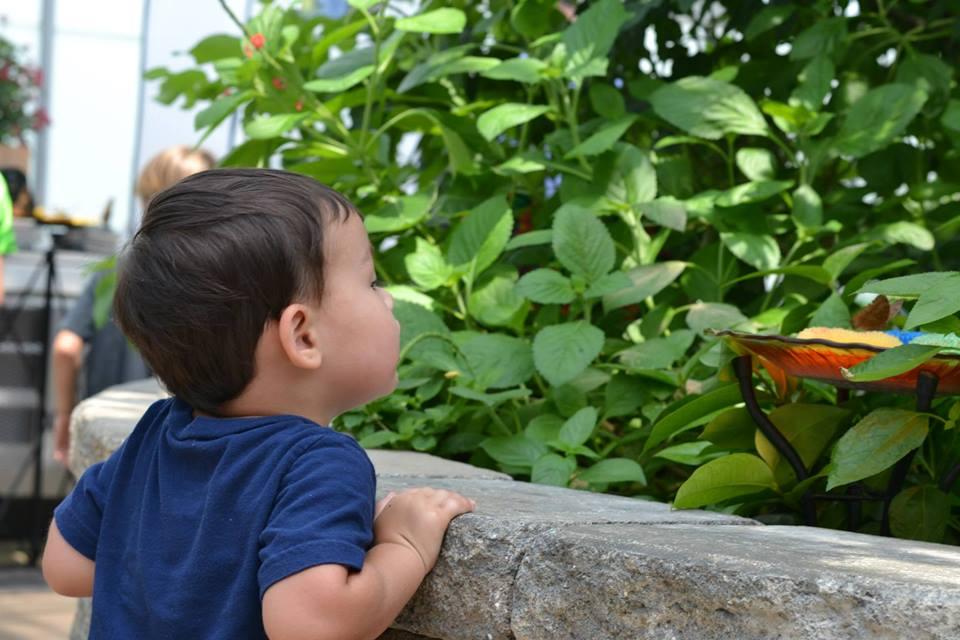 looking at butterflies
