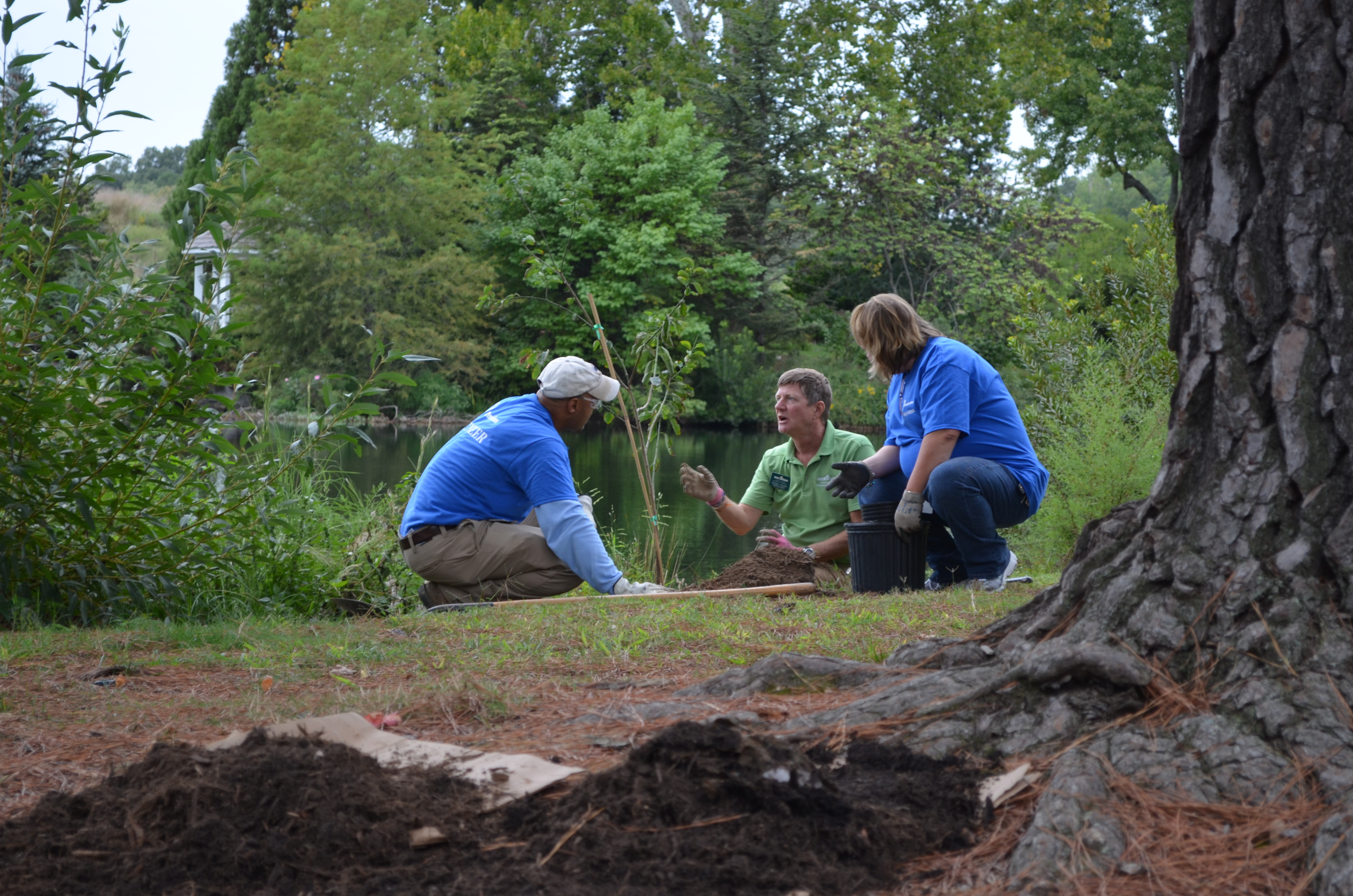 Dominion Power & Capital One Volunteers Complete Cherry Tree