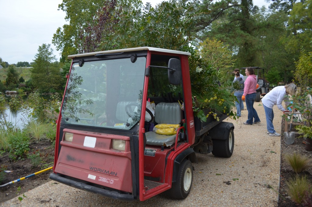 A cart filled with brush and weeds from along the lakeside.