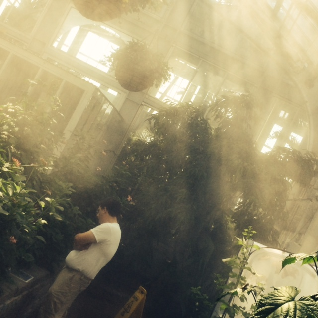 mist in the conservatory