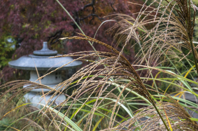grasses in the Asian Valley at Lewis Ginter Botanical Garden