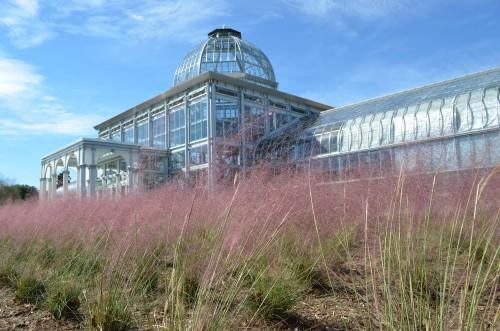Conservatory with Pink Muhlygrass Muhelnbergia capillaris