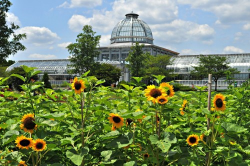 Sunflowers & the Conservatory photo by Cathy Hoyt