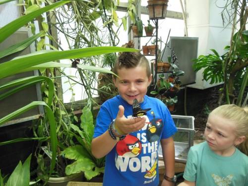 boy with birdwing butterfly