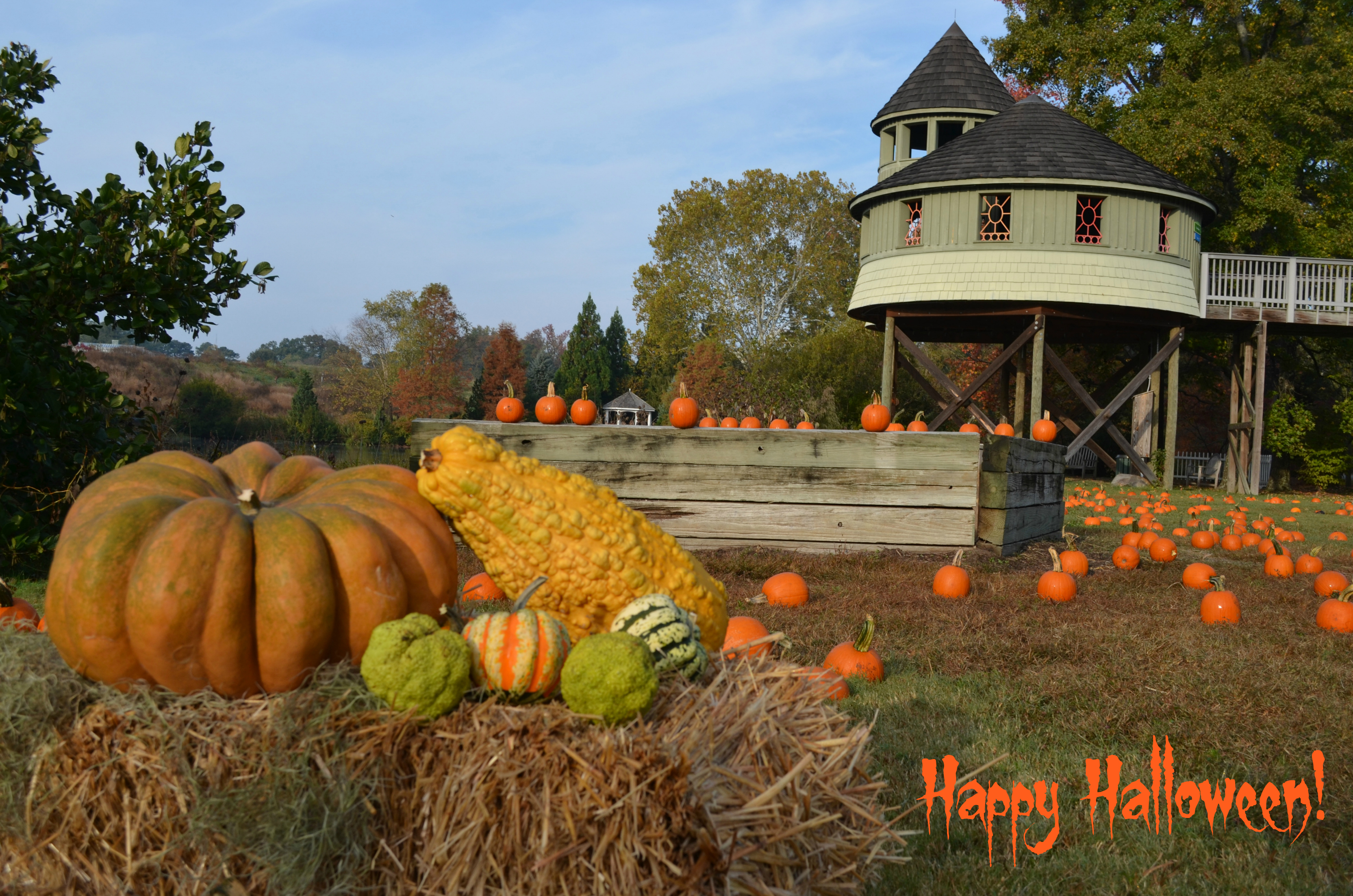 Happy Halloween! - Lewis Ginter Botanical Garden