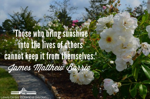 """""""Those who bring sunshine into the lives of others cannot keep it from themselves."""" - James Matthew Barrie."""
