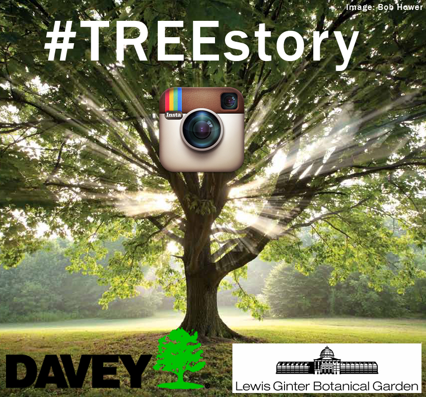 Tree Story Instagram Contest image