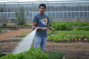 Student Gaurau Gupta watering in the Community Kitchen Garden