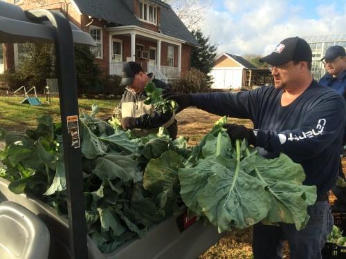 loading veggies in the cart