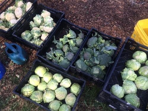veggies in crates