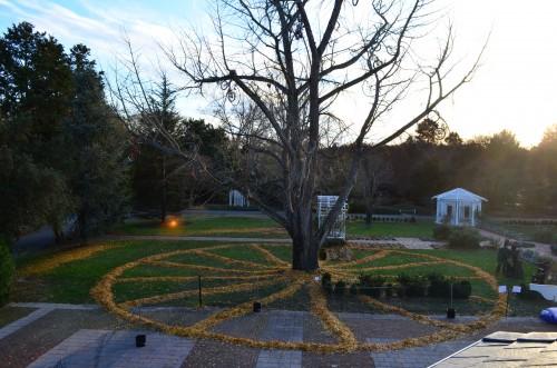 bike wheel  of leaves