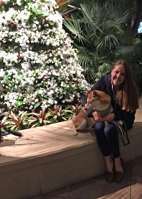 Shiba Inu and owner in front of the Conservatory Holiday Tree