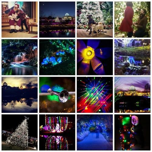 GardenFest Instagram finalists collage