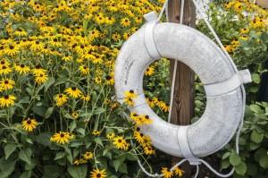 Yellow black-eyed-susan flowers