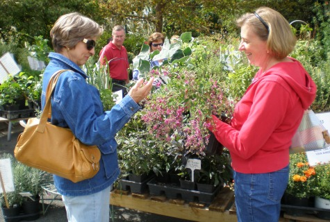 Shoppers at the Spring Plant Sale