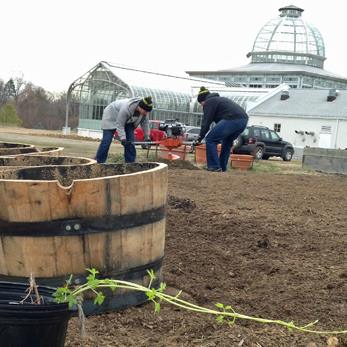 Planting Hops for Center of the Universe beer