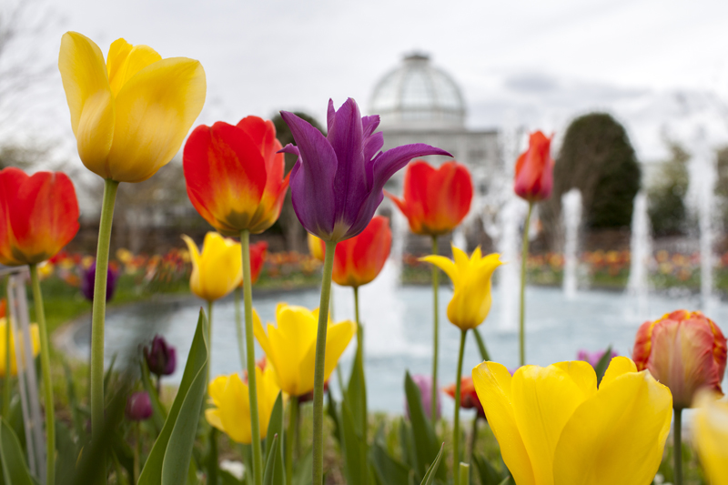 Lewis Ginter Botanical Garden offers year-round beauty on a historic property with more than 40 acres of spectacular gardens, dining and shopping. More than a dozen themed gardens include a Healing Garden, Sunken Garden, Asian Valley and Victorian Garden. Photo courtesy of Virginia Tourism Corporation, www.Virginia.org