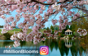 millionblooms-instagram-contest-2016