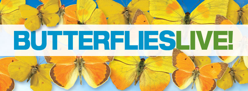 Butterflies LIVE! graphic