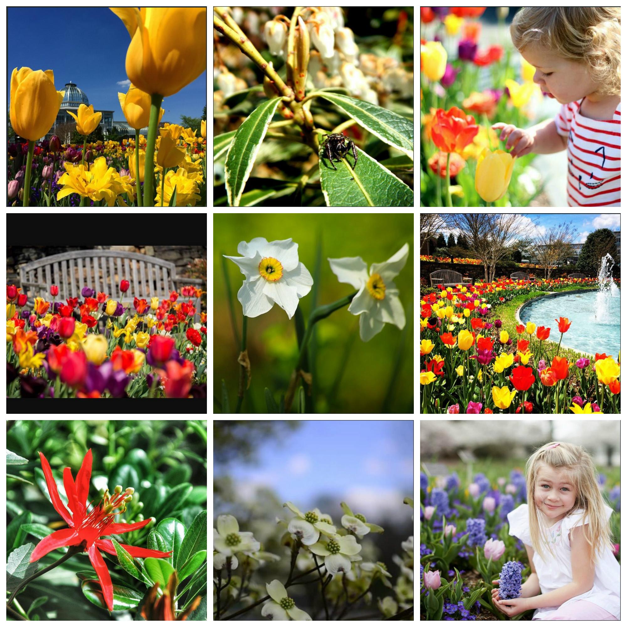 Instagram Million Blooms Collage