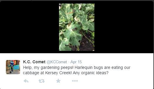 Harlequin bug tweet