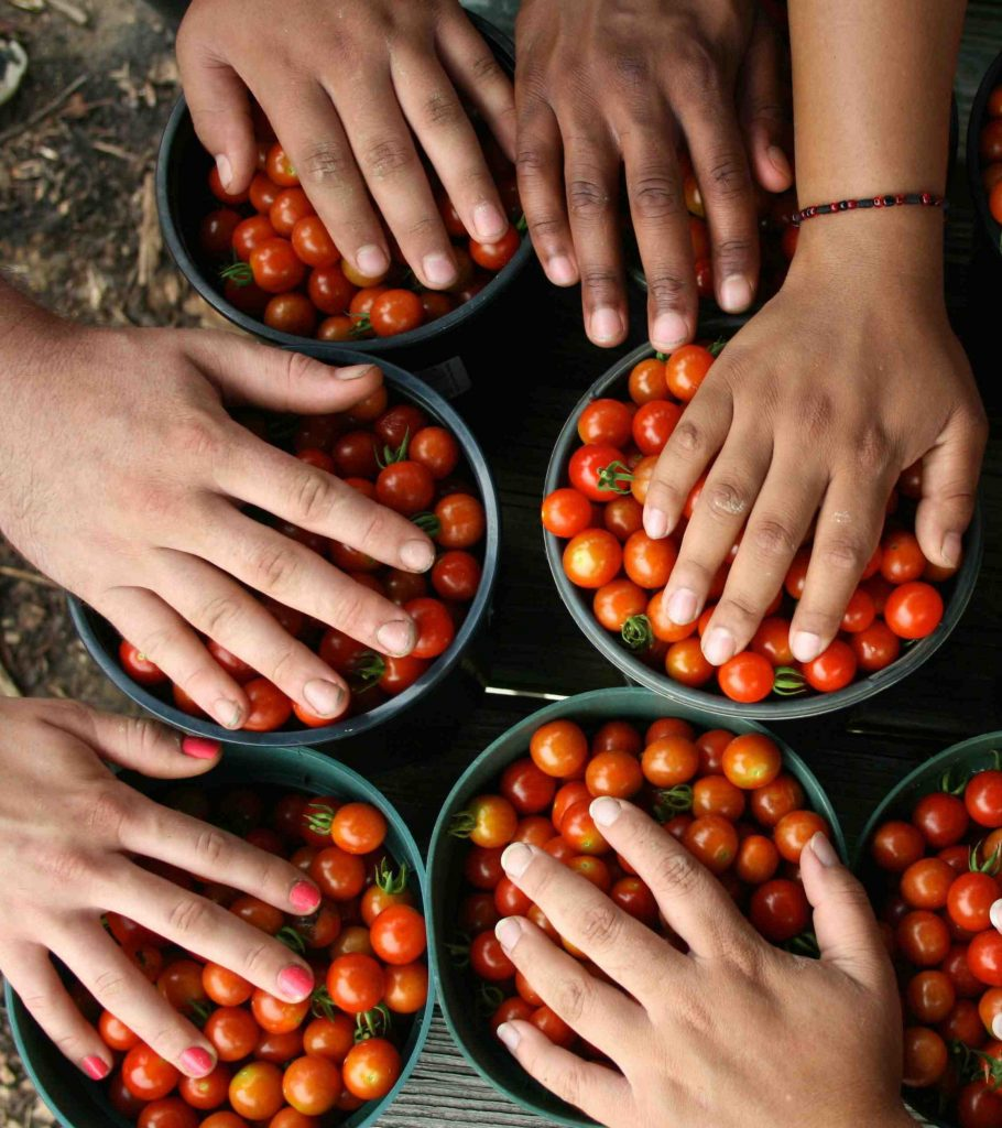 hands and cherry tomatoes